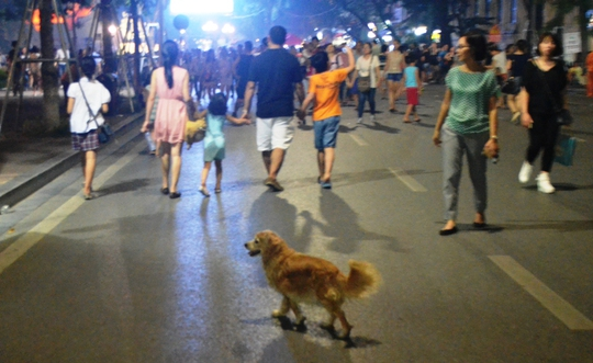 Chó thả rông ở phố đi bộ hồ Gươm