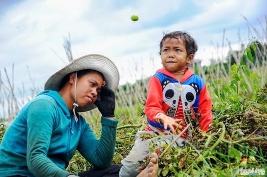 Chị Ha Thúy buồn thiu nhìn vườn cà chua bị phá bỏ, trong khi đứa con nhỏ chơi đùa với những quả cà chua - Ảnh: Lâm Thiên