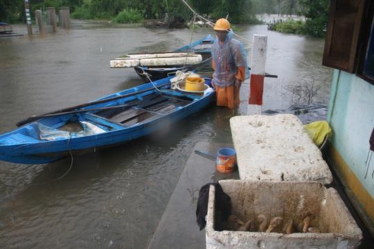 Những con vịt mới lớn là tài sản mang theo của một cụ ông ở phường Hòa Hương