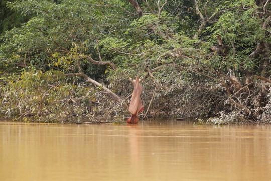 Nhìn vào tấm chiếu bị treo ngược trên cành cây đủ thấy nước đã rút hơn 1 mét nhưng Hương Khê vẫn bị cô lập
