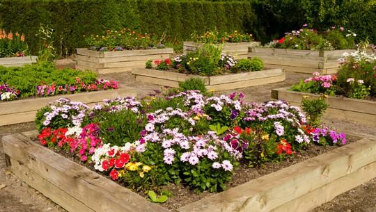 Bạn cũng có thể tạo khung gỗ để trồng hoa, tạo công viên hoa nhỏ xinh, rực rỡ cho vườn nhà.