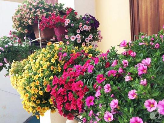 Ban công và bậc thềm nhà, nơi có nắng nửa ngày rất thích hợp để trồng triệu chuông.