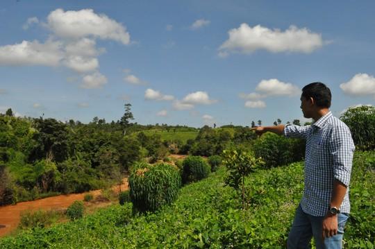 Dự án chưa triển khai xây dựng nhưng 23,6 ha rừng tự nhiên đã bị tàn phá