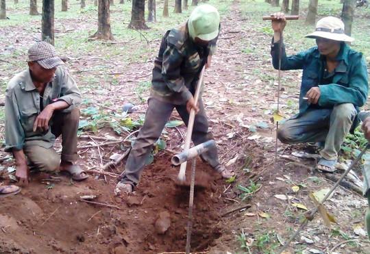 Người dân Tây Nguyên tìm gỗ quý để bán cho thương lái