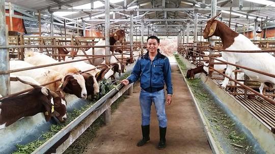 Trại dê núi của Hưng mang về thu nhập tiền tỉ mỗi năm ẢNH: G.B
