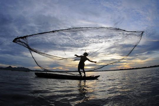 Tại cửa đập Tha La, Trà Sư nơi đón nước về đồng cũng là nơi nông dân thi nhau chài cá từ ngoài vào ruộng.