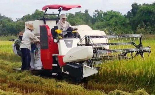Mấy năm gần đây, khi việc kinh doanh máy gặt lúa nở rộ, tình trạng tranh giành địa bàn, đánh chém nhau thường xuyên xảy ra trên các cánh đồng ở Thanh Hóa