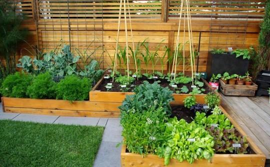 Khoảng diện tích trước sân cũng có thể trở thành góc vườn xinh xắn nhờ khung gỗ.