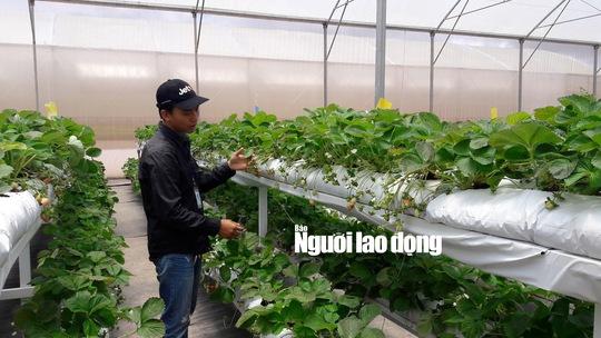 Theo anh Nguyễn Đức Máy một trong những kỹ thuật viên tại trang trại Cầu Đất Farm, cho biết rau trồng theo phương pháp thủy canh từ khi trồng trên giá đỡ khoảng hơn 20 ngày là có thể cho thu hoạch với giá từ 40.000 - 150.000 đồng/kg tùy loại rau, củ, quả.