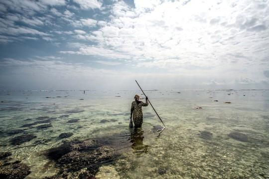 Bà Mama Juma, một thợ săn bạch tuộc theo mùa, rà soát dòng nước trong vắt gần bãi biển Paje để tìm kiếm những con bạch tuộc đang giấu mình. Ảnh: Tommy Trenchard