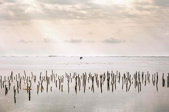 Một người phụ nữ một mình săn bạch tuộc vào buổi chiều ở một trang trại rong biển tại làng Bwejuu. Ảnh: Aurelie Marrier dUnienville