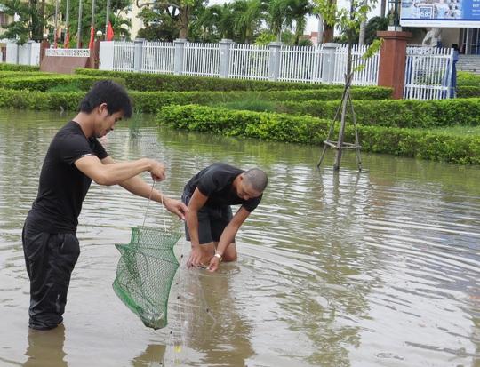 Bắt được nhiều cá trên đường phố Đồng Hới