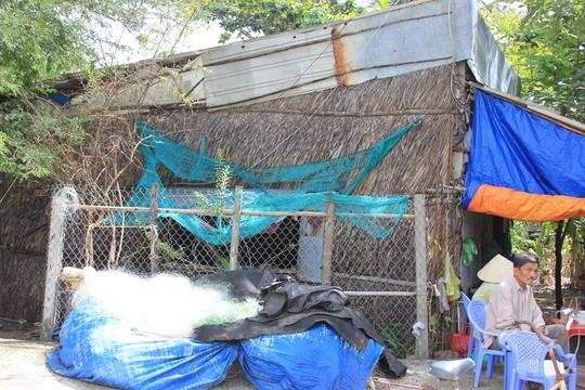Nhà mái tranh của một hộ dân ở ấp Đồng Tranh, xã Long Hòa, huyện Cần Giờ, TP HCM vướng quy hoạch nên không thể xây dựng