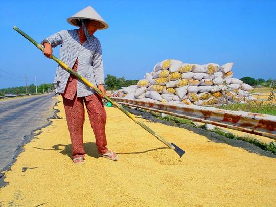 Mục tiêu của Đề án tái cấu trúc ngành hàng lúa gạo Việt Nam nhằm giúp nông dân nâng cao thu nhập hàng năm. Ảnh: Ngọc Trinh