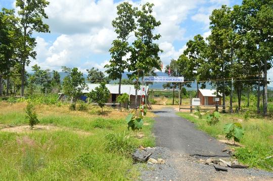 Phần lớn diện tích rừng của tỉnh Đắk Lắk giao cho Công ty Hoàng Nguyễn ở huyện Ea H'leo bị tàn phá Ảnh: CAO NGUYÊN