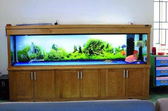 Những vị trí cần tránh khi đặt bể cá trong nhà