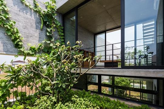 Căn nhà phố Sài Gòn xanh mọi góc nhìn