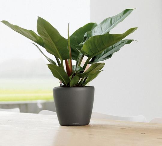 9 loại cây cảnh mini để bàn vừa xinh vừa rước tài lộc