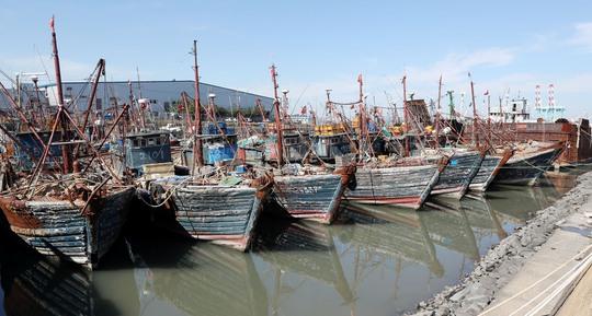 Một số tàu cá Trung Quốc bị giữ tại cảng ở TP Incheon - Hàn Quốc hôm 10-10Ảnh: Yonhap