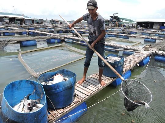 Người dân vớt cá chết do ô nhiễm