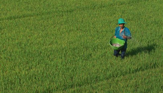 Thủ tướng đồng ý việc mở rộng hạn điền, tích tụ ruộng đất để tạo ra cánh đồng mẫu lớn
