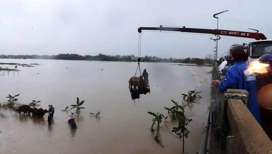 Dùng xe cẩu giải cứu đàn bò, tránh bị lũ cuốn tại tỉnh Phú Yên Ảnh: Quang Minh