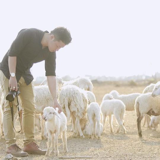 Những chú cừu trắng rất hiền lành, ngoan ngoãn để du khách cưng nựng, tạo dáng chụp ảnh. Ảnh: Đức Híp.