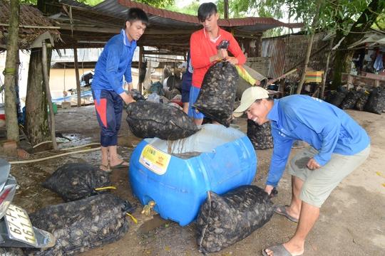 Những anh em công nhân trong đội khuân vác của anh Linh được chủ vựa trả công 150.000 đồng/ngày.
