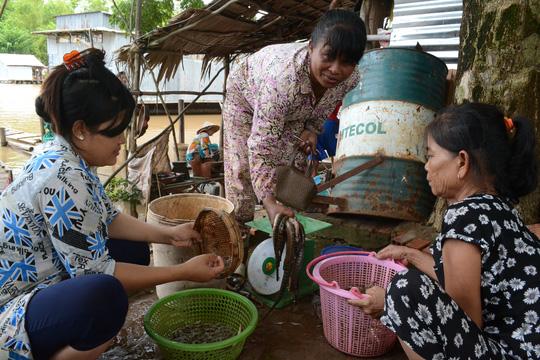 Lượng cá, tôm từ Campuchia về các vựa ở xã Phú Hội hiện chưa nhiều mà chủ yếu là cua, ốc.