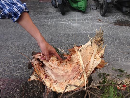 Nhánh cây có dấu hiệu đã mục ruỗng