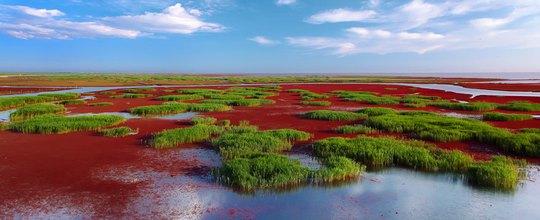 Bãi biển đỏ đẹp như tranh khi thu sang