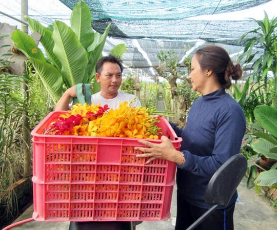 TP HCM bảo tồn được hơn 380 giống hoa lan quý hiếm - Ảnh 1.
