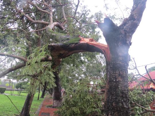 Cây xanh ngã đổ ở TP Huế