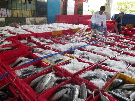 Cá ngừ sọc dưa cũng đạt sản lượng tốt