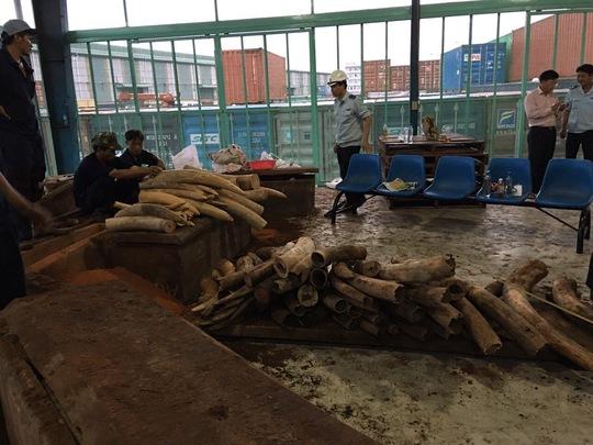 Số ngà voi nhập lậu được phát hiện trong các khối gỗ