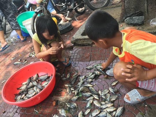 Trẻ em cũng được huy động để nhặt cá
