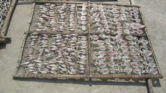 Cá và mực phơi ở khắp nơi