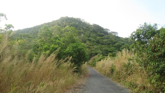 Đường lên hải đăng Nam Du với bờ cỏ lau tuyệt đẹp