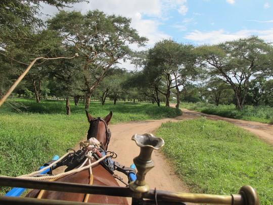 Ngồi xe ngựa và rong chơi trên những con đường rợp bóng cây