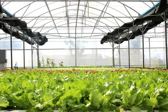 Veeteq Farm: Nông sản an toàn cho trái tim xanh