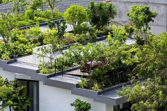 Các kiến trúc sư thiết kế nhà có cây bao quanh và mảng xanh lên tới 50% diện tích mái. Mái được chia thành những nhịp xếp tầng như bậc thang.