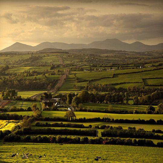 Những thảm cỏ xanh, thật trong lành, bình dị
