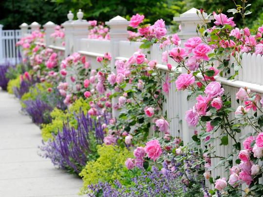 Tô điểm cho hàng rào nhà bạn với thiên nhiên xanh mát