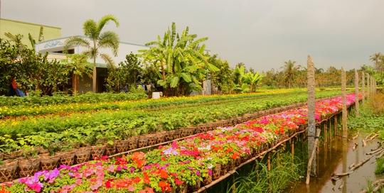 Làng hoa Sa Đéc mùa Xuân