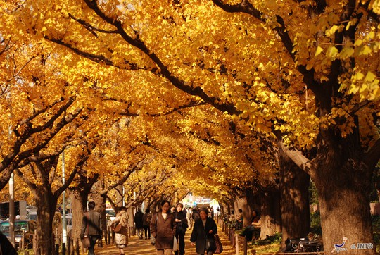 Nhật Bản mùa thu - Ảnh: JNTO
