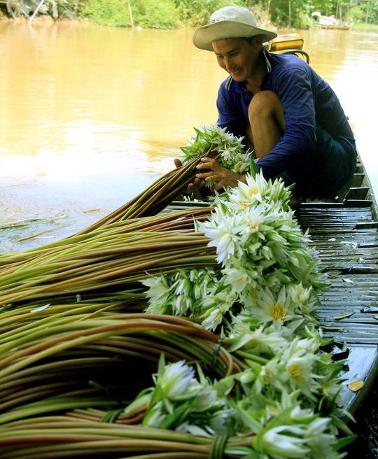 Cũng có người phải sang tận Campuchia để mua bông súng đồng về bán lại kiếm tiền chênh lệch.