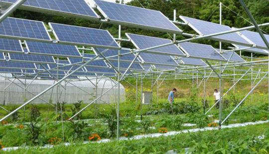 Một nông trại sạch có tấm năng lượng mặt trời ở Fukushima - Ảnh: Kyodo