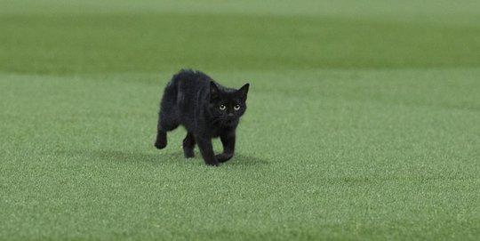 Chú mèo mun trên sân Anfield ở trận Liverpool - M.U rạng sáng 18-10