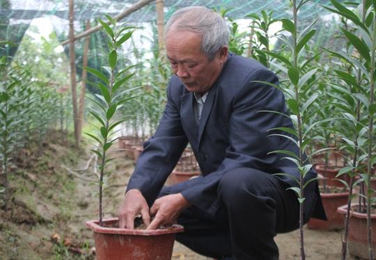 Để hoa ly bén đất nơi đây, ông Bình đã chấp nhận 2 năm trắng tay để thử nghiệm giống hoa khó tính này đối với thổ nhưỡng và điều kiện khí hậu khắc nghiệt ở Nghệ An.