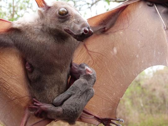 Ảnh: iNaturalist.org